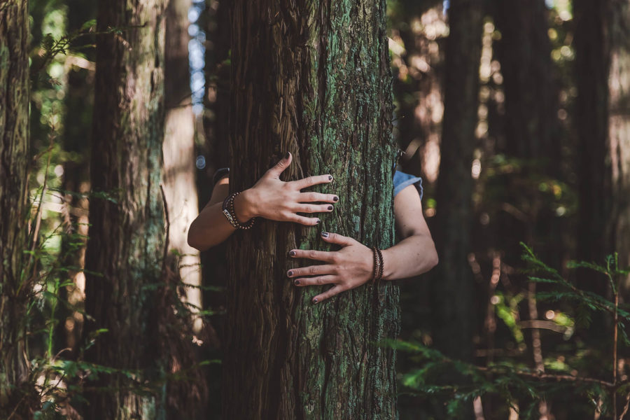 woman hugging tree - sustainable business